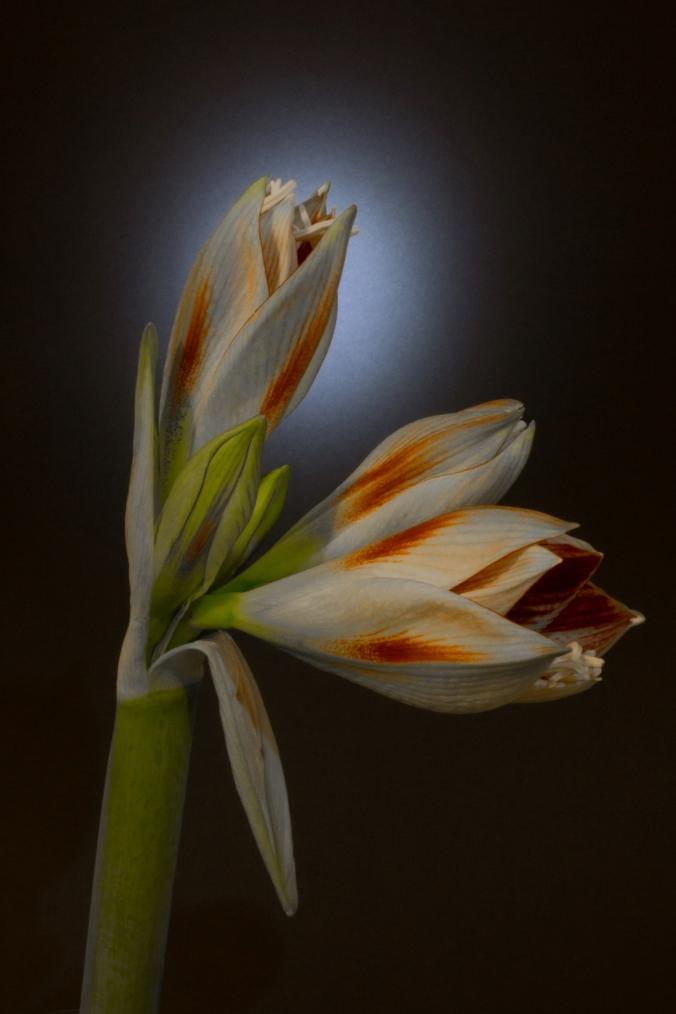 Mona Dee photography  flower a