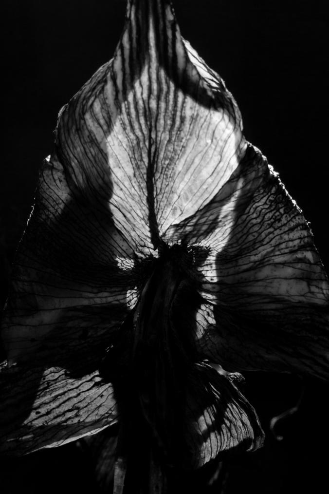 Mona Dee photography  flower b